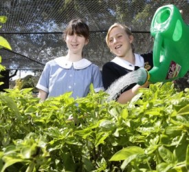 School Gardens Improve Students' Health And Willingness To Eat Vegetables